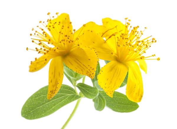 st johns wort for anxiety